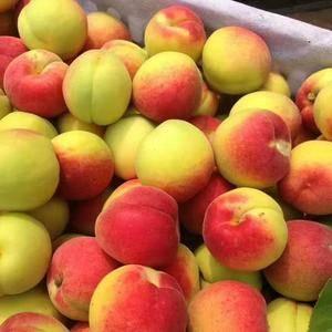 我们是陕西省大荔县,这里都是以优质水果为主,大荔县人民热...