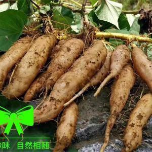 贵州紫云红芯红薯,供货要求1-2两、2-5辆、5-8两 ...