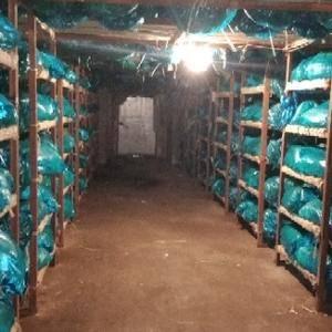 常年供应代收代存加工冷藏金乡优质蒜苔,量大价优,常年供应...