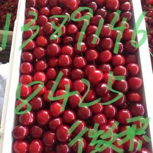 陕西大棚樱桃种植基地,陕西樱桃上市销售价格合理,陕西樱桃...