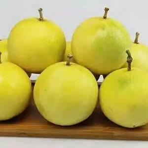 我将竭诚为大家提供最优质的黄金百香果。