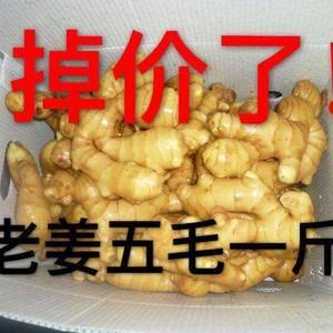 山东生姜【150-64916922】老姜,小黄姜,大黄姜...
