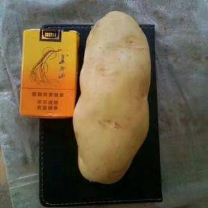 常年供应荷兰十五土豆,货全1-2-3-4通天。精品,一级...