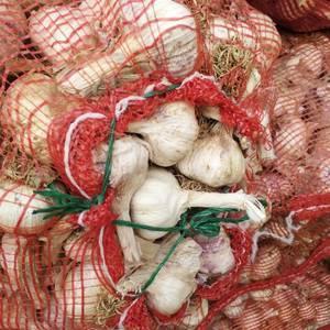 代收班鸠店紫皮蒜种,养蒜黄专用大蒜