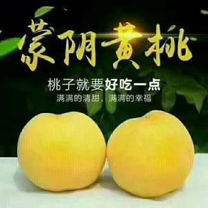 山东优质蜜桃基地,现有大量各种桃子,需要的联系,真诚期待...