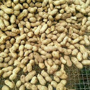 供应鲜花生,红薯品种全,需要的老板联系!