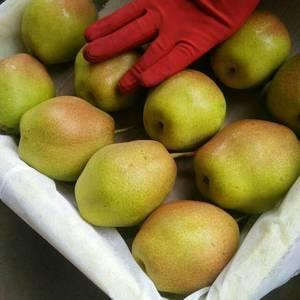 陕西库存红香酥梨价格稳定,货源充足,价格在1.8-2.2...