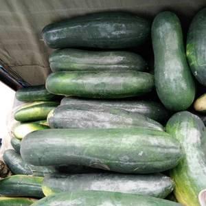 大量冬瓜上市,15斤以上,品质好欢迎老板订货了