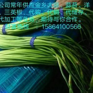 本公司常年经营大蒜,洋葱,蒜苔,辣椒,等农富产品的代购,...