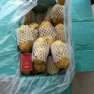 大量供应山东肥城库存土豆,品种荷兰十五,量大质优,规格齐...