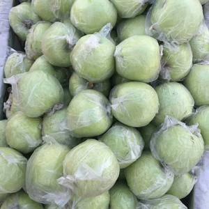 潍坊寒亭大量供应膜袋金帅苹果