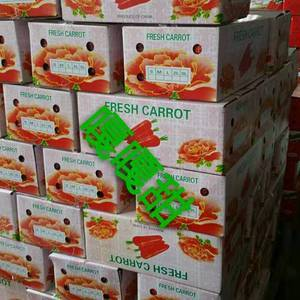 三红萝卜质量好,欢迎前来采购。
