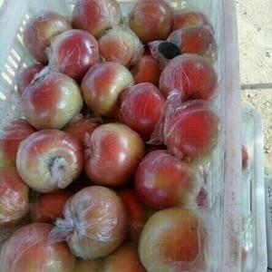 山东日照苹果产地种植基地,全县优质苹果种植面积达到800...