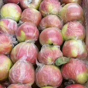 山东万亩苹果种植基地。嘎啦、美八、红将军、金帅苹果大量上...