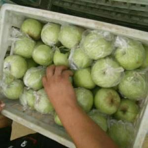 山东沂水县苹果产地,现已大量上市品种齐全,质优价廉,本地...