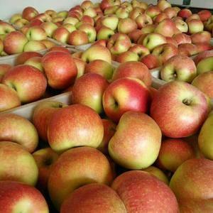 山东美八苹果大量销售,价格便宜货源充足,颜色鲜艳口感脆甜...
