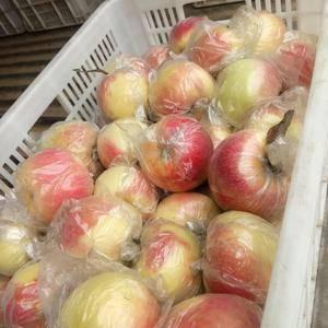 山东嘎啦苹果大量上市,价格便宜货源充足,颜色鲜艳口感脆甜...