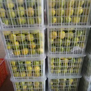 主要经营销售宜昌蜜桔、蜜柚、脐橙。脐橙可以周年供应,伦晚...