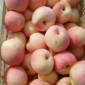 山东红将军苹果大量上市,有膜袋,纸袋,表光好,颜色鲜亮!...