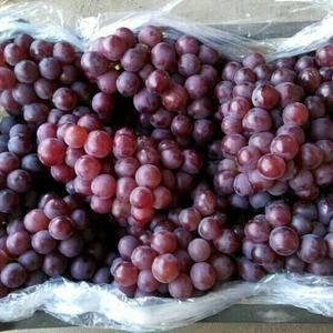 我处有大量双袋巨峰葡萄,颗粒大,颜色鲜,口感好,另备有大...