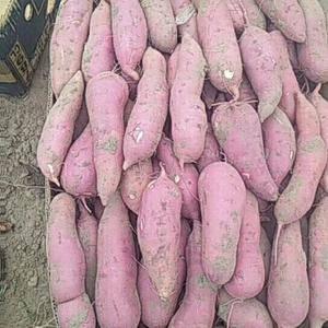 我处盛产沙土地红薯,薯型细长,紫红,薯心黄色,本人常年代...