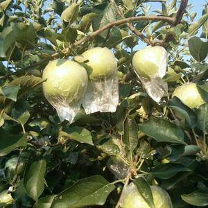 金帅苹果便宜了,口感脆酸甜,个头75以上价格便宜了,需要...