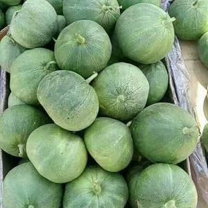 辽宁北镇常年有脆宝香瓜,有收脆宝香瓜的可以和我联系。电话...