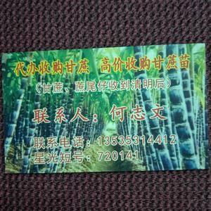 番禺甘蔗正在热售中,欢迎老板咨询13535314412