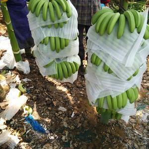 广西香蕉便宜供应