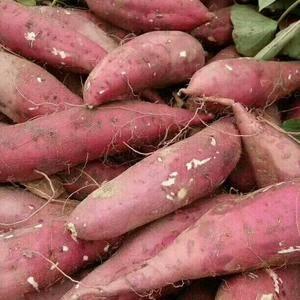 大量供应紫薯,龙九,双季,西瓜红,19,联系电话1378...