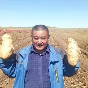 内蒙古各种名优种薯大量供应中,有大丰,高原,畅茂源,中加...