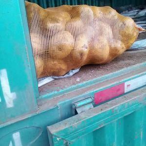 河北围场,内蒙地区冀张薯,个头大,大多半斤以上,薯型椭圆...