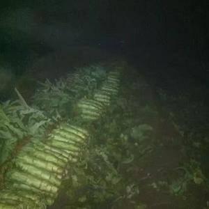 我处是鲁南苏北地区最大的莴笋种植基地!种植经验丰富,此时...
