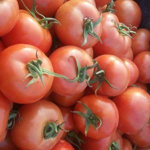 聊城大红西红柿大量上市,本处包装,人工,货车,各方面物料...