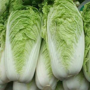大量冬储白菜出售,希望各地大老板前来选购