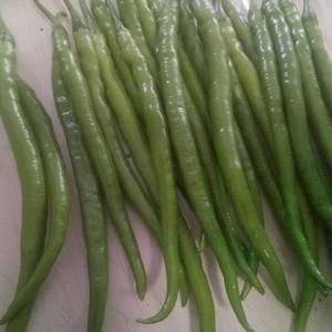 河南夏邑辣椒大量上市了,主要产品有青椒,线椒,301
