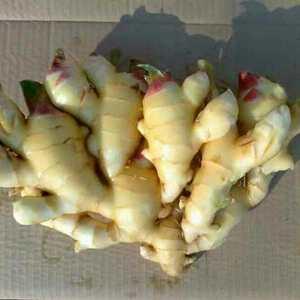 今年的新鲜大黄姜,大量上市,价格优惠。