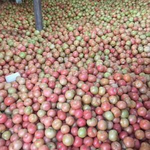 供应优质西红柿,质优量大,本处负责代购,配车,装箱装车,...