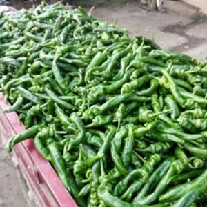 本地辣椒大量上市,品种有螺丝椒,线椒,陇椒,二炮,价格随...