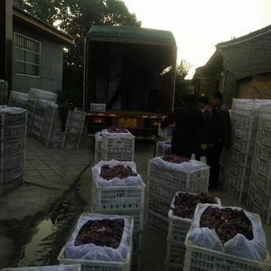 红提葡萄大量出售了.!货源充足价格稳定,陕西苹果种植基地