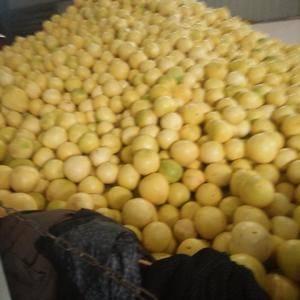 注意注意:有需要蜜柚的老板可以和我联系价位0.55一斤左...