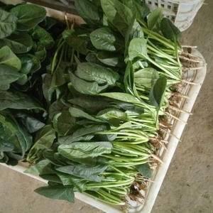 我处各种蔬菜大量上市,品种齐全,有冷库,一条龙服务。