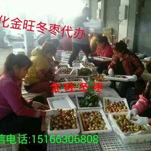 沾化冬枣已经大量上市,金旺冬枣代办诚招各地客商,