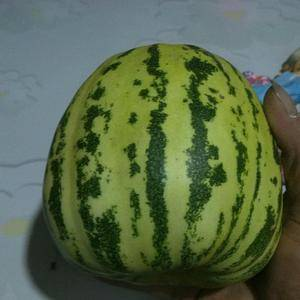 常年代收香瓜甜瓜  蔬菜黄瓜,品种有花蕾 绿宝 脆梨 脆...