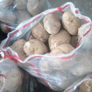 大量出售土豆   克星一号   晋薯16  219