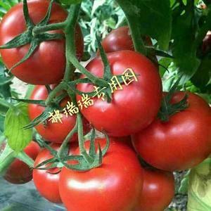 山东聊城河店镇瓜果蔬菜菌类交易市场,市场分东区和西区占地...