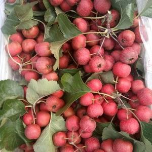 代收:大金星商品果,罐头果,打浆果
