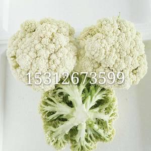 江苏徐州白面青梗松花菜,散花,西兰花,每天上市量约几十万...
