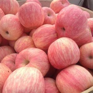 山东苹果批发产地,大量优质红富士苹果上市,货源充足,价格...