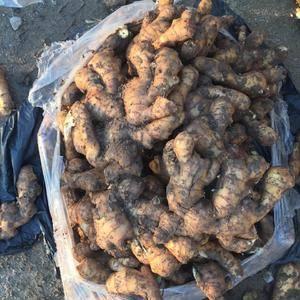 山东最大生姜种植基地,常年供应大姜小姜姜母,提供包装水洗...